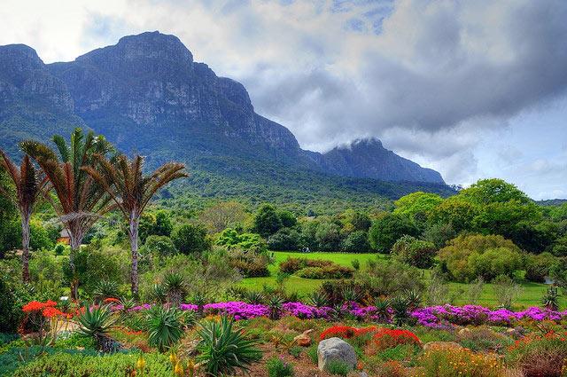 Kirstenbosch---landscape4.jpg