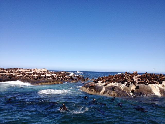 Hout-Bay---Seal-Island.jpg