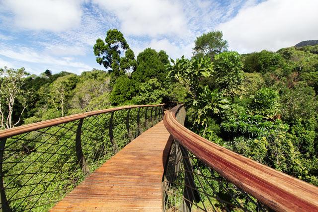 Kirstenbosch---boomslang2.jpg
