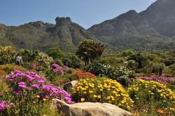 Kirstenbosch---landscape1.jpg