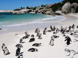 Boulders-Beach---penguins-1.jpg