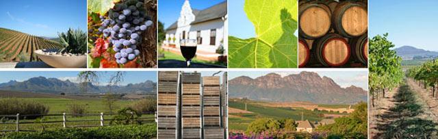 Wine-Route-1.jpg