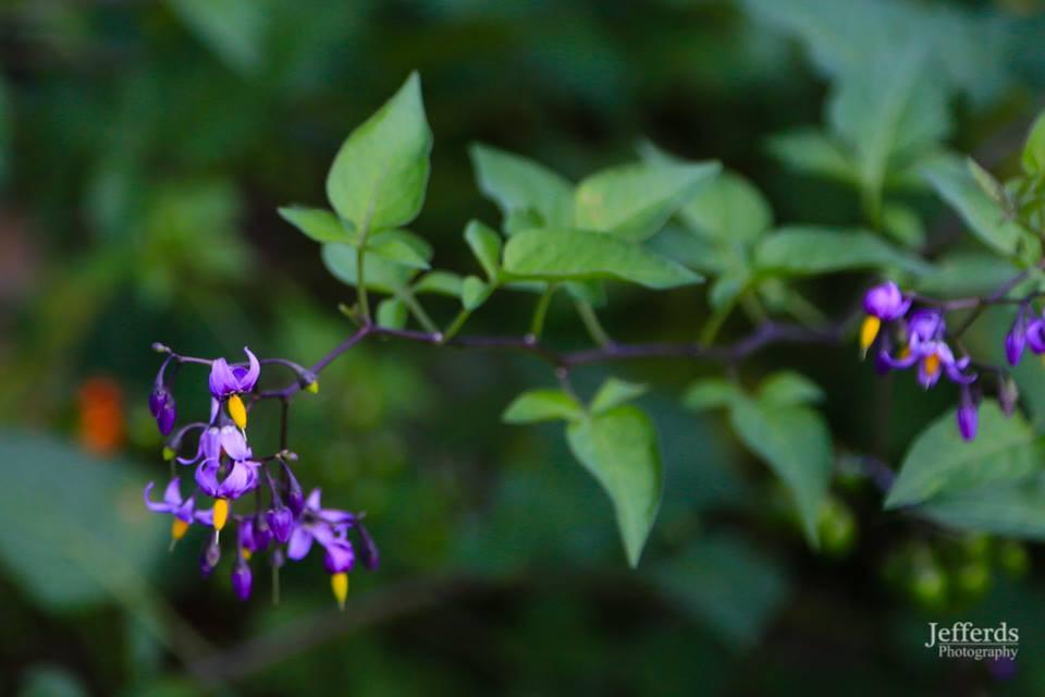wildflowers21].jpg
