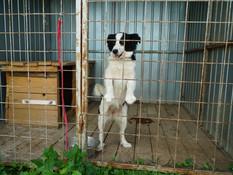 Konkurencia obvinila prevádzku karanténnej stanice pre psov. Prípad je v rukách polície