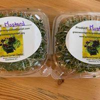 Mustard Microgreens 2oz