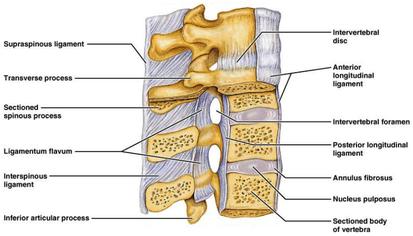The Lumbar Spine Masterclass, Part 3
