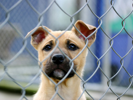 REPORT ABUSE: Animal-Cruelty Task Force & Hotline in Harris County