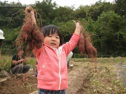 Les enfants japonais et les patates.