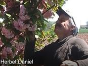 Herbet Daniel.png