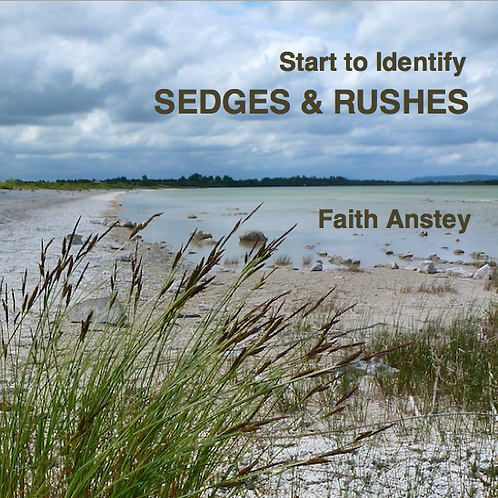 START TO IDENTIFY SEDGES & RUSHES