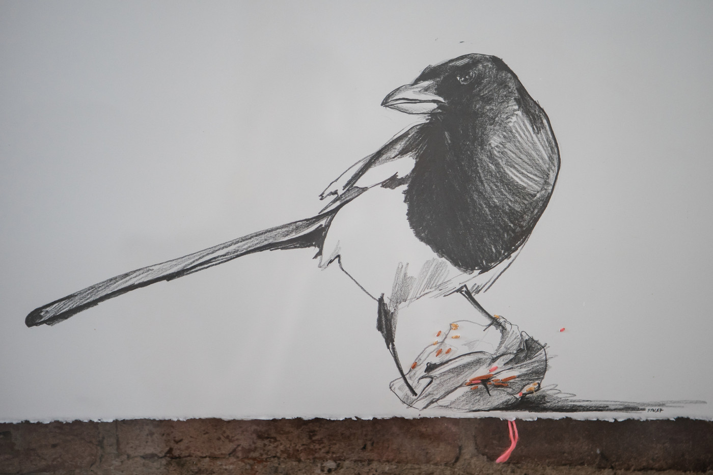 Magpie 4 with peach