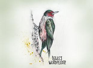 Lewis_Woodpecker_MedRes.jpg