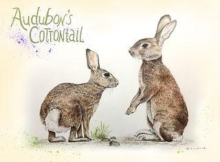 Rabbit Hears a Warning