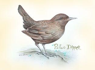 Pallas_Dipper_DEHNER2017_postRes.jpg