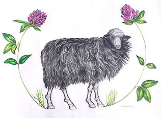 Sheep_ForPostcard2019.jpg