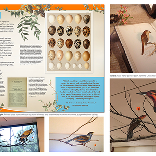 Drawn From Nature Exhibition details