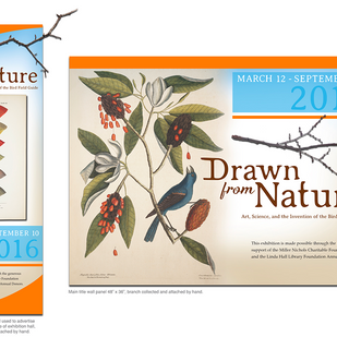 Drawn From Nature TitlePanels