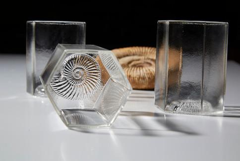 Ammonite Glasses