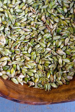 wheat-seeds-1500443510-3161442.jpeg