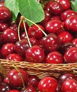 fresh-cherry-1502832854-3220978.jpeg