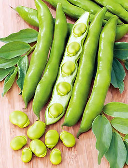 green-broad-beans-1502829693-3220946.jpe