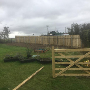 Tree stump removal and new fence installed