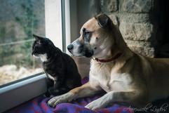 Max et Chira, chat et chien