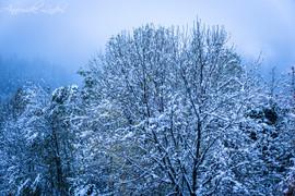 Arbres sous la neige en novembre 2019, Ardèche