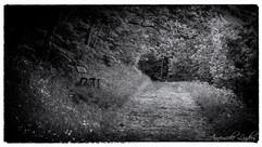 Nature noir et blanc
