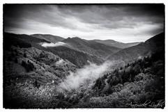 Nature en noir et blanc
