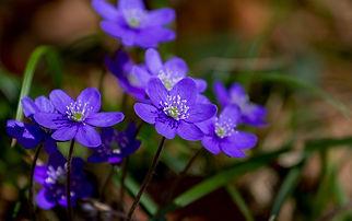 flower-3329845_1280.jpg