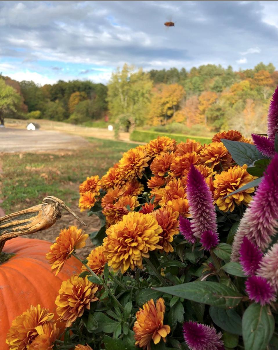 WBF Autumn Impressionist