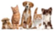 Suipa / Cachorros e Gatos