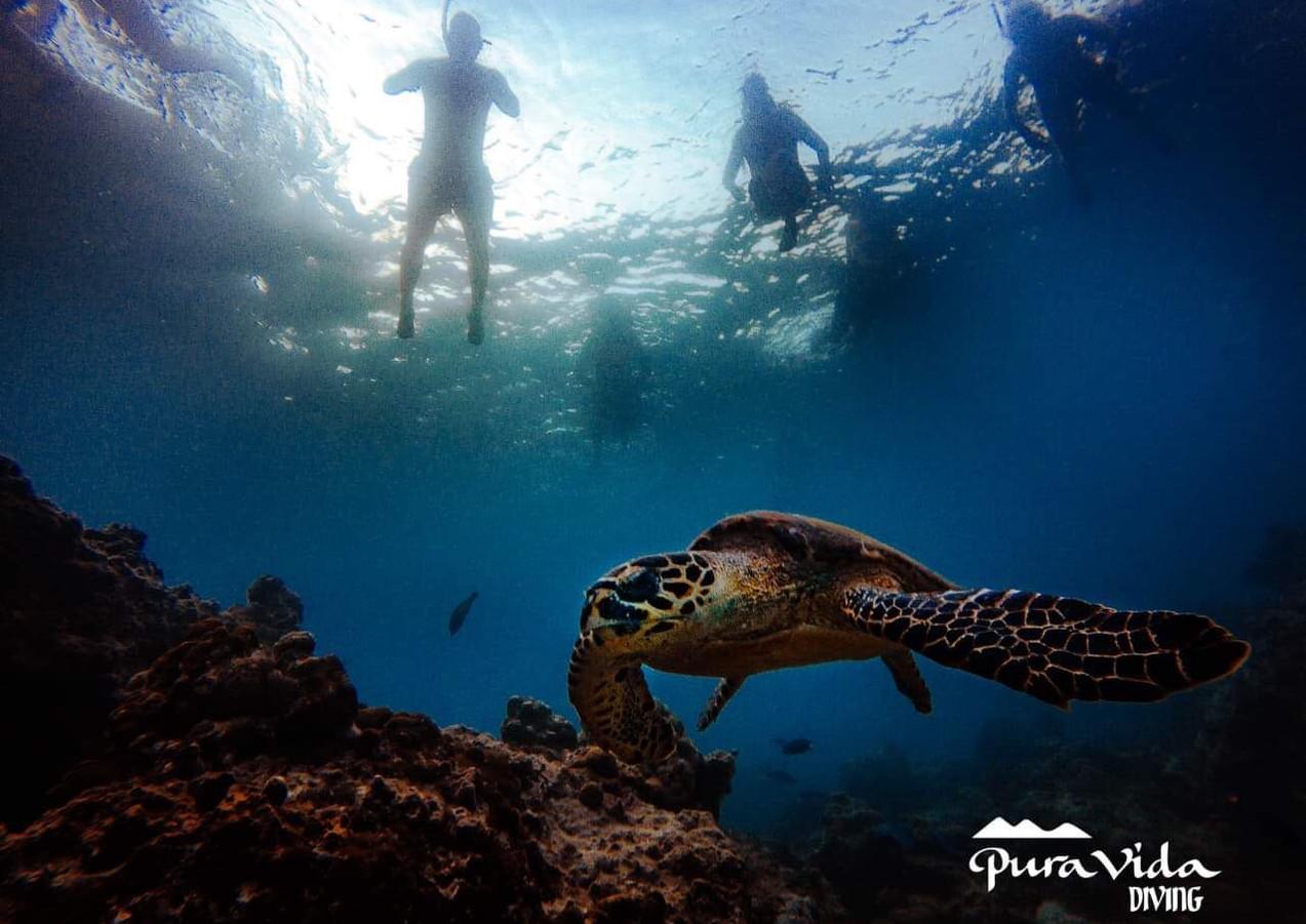 Snorkel con tortuga