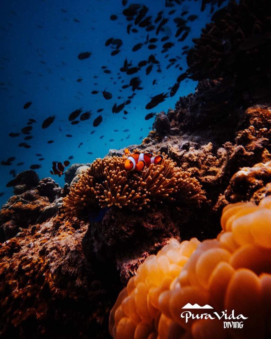 Encontrando a Nemo