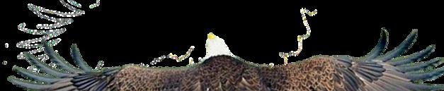 eagleback%202_edited.png