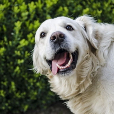 Ways to enrich your dog's life in Northamptonshire