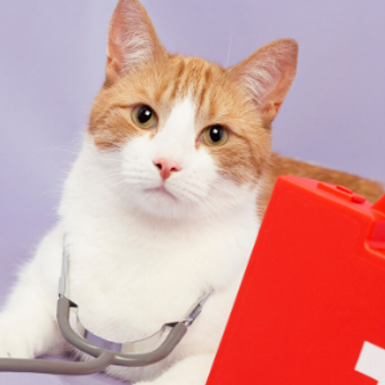 Learn what to do in a cat health emergency with Northlands Veterinary Hospital