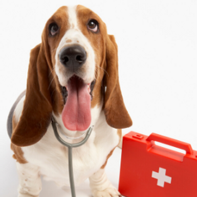 Head vet Catherine explains how to recognise 7 conditions that require first aid for dogs