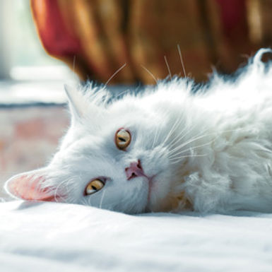 Put a spring in your cat's step with some advice from Cat & Rabbit Clinic