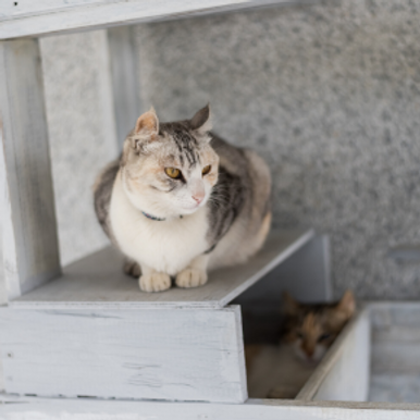 How to choose a good cat sitter in Northampton