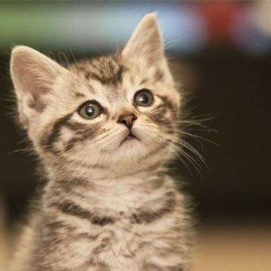 Is it safe to microchip your cat with Cat & Rabbit Clinic?