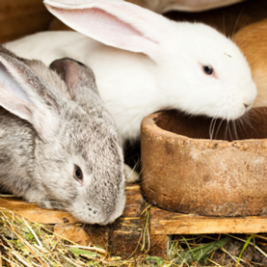 Holiday care for small mammals in Northampton