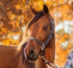 Buy A Bob Marshall Treeless Saddle- Savvy Sport