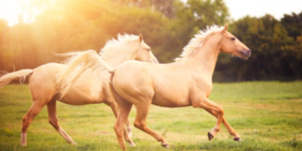Bob Marshall Treeless Saddles for Sale