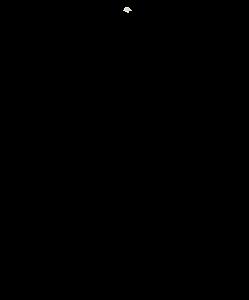 Agave sisalana - source of sisal rope