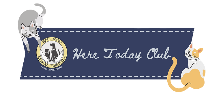 Transparent HT Club Email Banner.png
