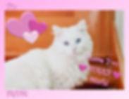 I Love You Furry Much.jpg