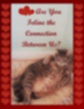 Feline the Connection 2.jpg