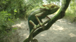 School project : chameleon